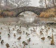 Central Park del ponte di Gapstow, New York Immagine Stock