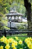 Central Park in der Blume Stockfotos
