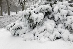 Free Central Park During Middle Of Snowstorm With Snow Falling In New York City Stock Image - 113025801