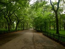 Central Park. An empty, tree covered walkway in central park, New York in the summer Stock Photography