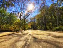 Central park in fall, sun in the background royalty free stock photo