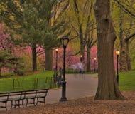Central Park fjäder Arkivbilder