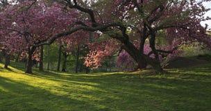 Central Park fjäder Fotografering för Bildbyråer