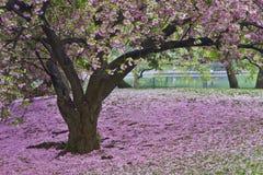 Central Park fjäder Arkivbild