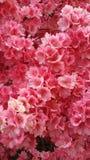 Central Park, floreciendo Foto de archivo libre de regalías