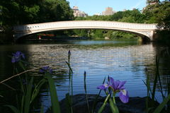 Central Park Flower and Bridge. One of the many bridges in Central Park, Manhattan Royalty Free Stock Photos