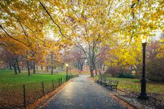 NY Central park at foggy morning Royalty Free Stock Image