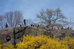 Central Park Hill in New York City Stock Photos