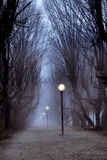 Central park hornbeam tree alley in fog, sinister and mysterious Royalty Free Stock Image