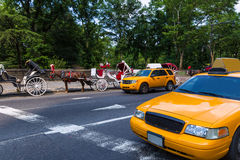 Free Central Park Horse Carriage Rides In New York Stock Photography - 48999802