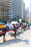 Central Park horse carriage rides in New York Stock Photography