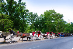 Central Park horse carriage rides in New York Royalty Free Stock Photography