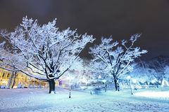 Central Park i Riga, Lettland på vinternatten Royaltyfri Bild