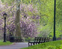 Central Park In Spring Royalty Free Stock Photography