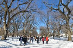 Central Park on January 24, 2016, NYC, USA. Stock Photography