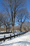 Central Park on January 24, 2016, NYC, USA. Royalty Free Stock Photography