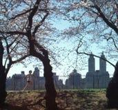 Central Park Jogger New York City USA stock image