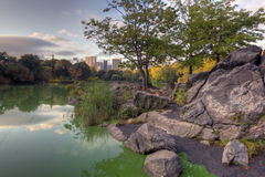 Central Park the lake Stock Photography