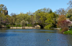 Central Park Lake Stock Image