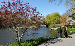 Central Park Lake. New York City Central Park Lake and trees royalty free stock photo