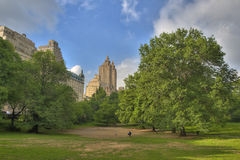 Central Park in New York. Scenic view of leafy green trees in Central Park with city skyline in background, New York, America royalty free stock photo