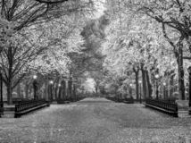 Central Park Mall in autumn royalty free stock image