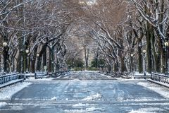Central Park Mall. Is a mall in Central Park, in Manhattan, New York City Royalty Free Stock Photography
