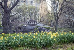 Central Park, Miasto Nowy Jork wiosna Zdjęcia Stock