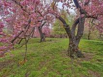 Central Park, Miasto Nowy Jork wiosna Obraz Stock