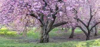 Central Park, Miasto Nowy Jork wiosna Fotografia Stock