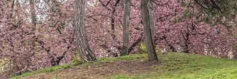 Central Park, Miasto Nowy Jork wiosna Zdjęcie Stock