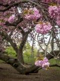 Central Park, molla di New York Immagine Stock