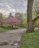 Central Park, molla di New York Immagini Stock Libere da Diritti