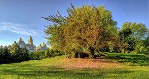 Central Park, molla di New York Fotografie Stock