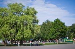 Central Park named after Belousov. Stock Image