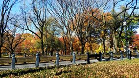 Central Park in New York Stockfotos