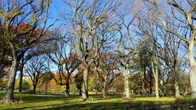 Central Park in New York Lizenzfreies Stockfoto
