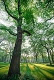 Central Park New York Photos libres de droits