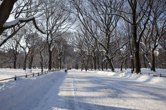 Central Park, New York. Stock Image