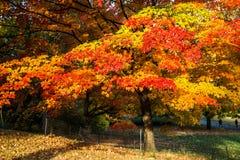 Central Park New York Fotografia Stock Libera da Diritti