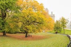 Central Park, New York Immagini Stock Libere da Diritti