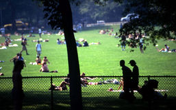 Central park new york city. Great lawn in central park in new york city Stock Images
