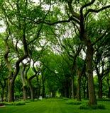Central Park a New York City Fotografie Stock Libere da Diritti