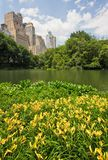 Central Park and New York City. A pond in central park with high rise buildings behind it in New York City. There are yellow flowers in the foreground Royalty Free Stock Photos