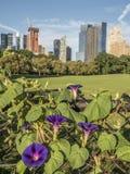 Central Park, New York City Immagini Stock Libere da Diritti