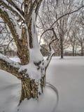 Central Park, New York City Stockfoto