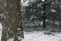 Central Park, New York City après tempête de neige Photographie stock
