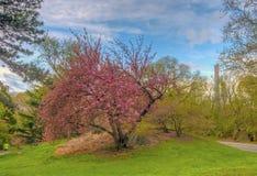 Central Park, New York City au printemps photographie stock libre de droits