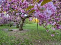 Central Park, New York City au printemps photo libre de droits