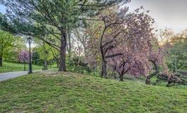 Central Park, New York City au printemps photo stock